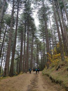 Pineta Ragabo versant Nord de l'Etna avec Nicolas
